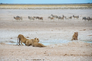 Etosha National Park: Full or Half-Day Game Drive