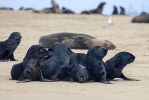 From Walvis Bay: Half-Day Eco-Friendly Kayak Tour