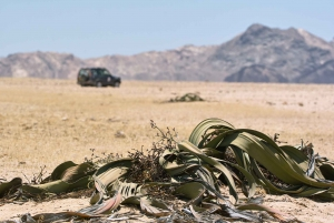 From Walvis Bay: Moon Landscape & Welwitschia Half-Day Tour