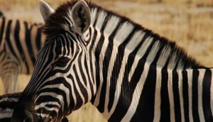 HuntAfrica Namibia