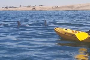 Kayaking at Bird Rock