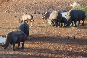 Namibias Best 4 Day Etosha Safari Private Guide Tour