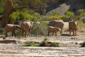 Namibias Best 4 Day Etosha Safari Private Guide Tour