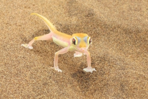Walvis Bay: 4x4 Desert Excursion to Sandwich Bay