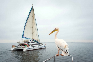Walvis Bay: Marine Big 5 Luxury Catamaran Tour