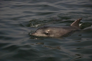 Walvis Bay: Pelican Point Kayaking Tour