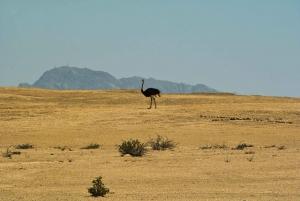 Walvis Bay Shore Excursion: Flamingos, Dune 7, Swakopmund