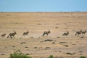 Walvis Bay: Wildlife Photography Full Day Tour