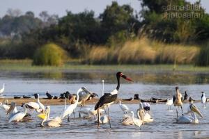 Wilderness Safaris Namibia (Pty) Ltd