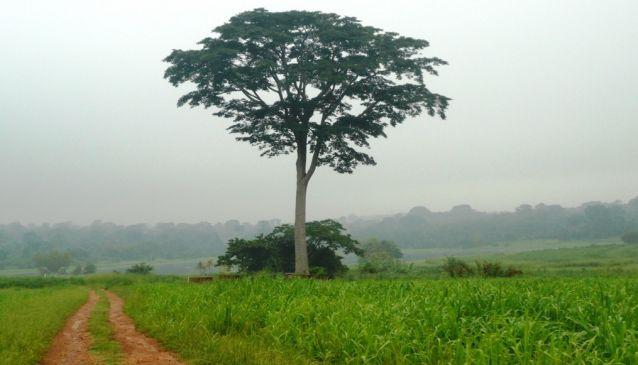 IITA Forest