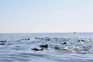 From Khasab: Snorkeling and Jebel Harim Mountain Tour