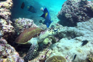 From Muscat: Dimaniyat Islands Snorkeling Tour