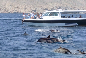 From Muscat: Dolphin Watching Tour