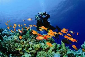 Muscat: Dimaniyat Island Snorkeling Tour