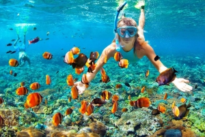 Muscat: Dolphin Watching and Snorkeling Experience