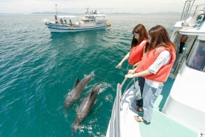 Muscat: Dolphin Watching and Snorkeling Tour
