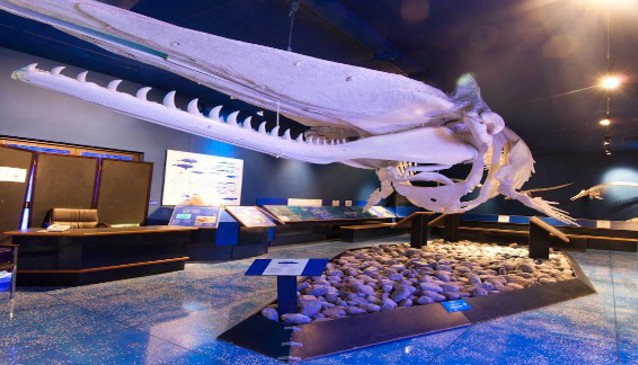Natural History Museum Muscat