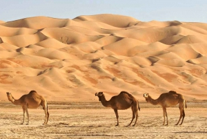 Oman: Wahiba and Wadi Bani Khamed Private Trip