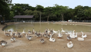 Buenaventura Zoo