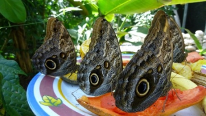 Butterfly haven El Valle De Anton