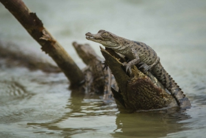From Panama City: 5-Hour Eco-Cruise on Gatun Lake