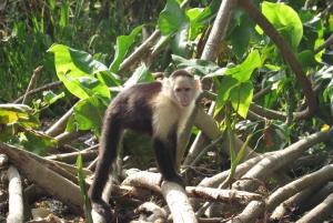 From Panama City: Gatun Lake and Monkey Island Tour