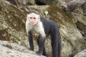 From Panama City: Monkey Island and Sloth Sanctuary Tour