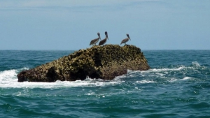 Isla Pajaros - Bird Island