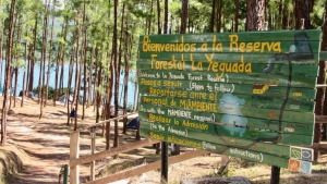 La Yeguada Forest Reserve