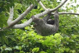 Panama City: Panama Canal and Gatun Lake Jungle Eco Cruise