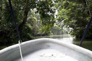 Panama: Monkey Island Private Tour