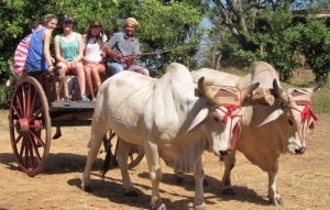 River Exploration, Canajagua hiking, Cart Rides, Gastronomic and Fishing Tours - Los Santos, Panama
