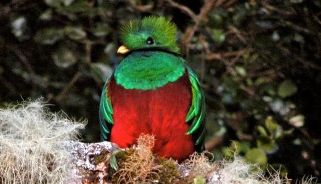 Sendero Los Quetzales (Quetzals Trail)