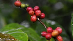 The Coffee Circuit