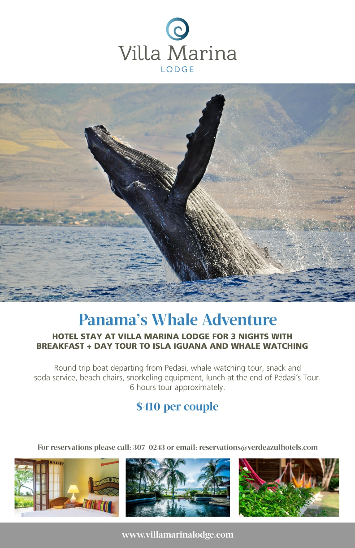 Whale Watching Tours - Villa Marina