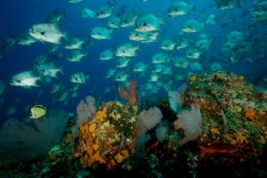 Tour Isla Cébaco