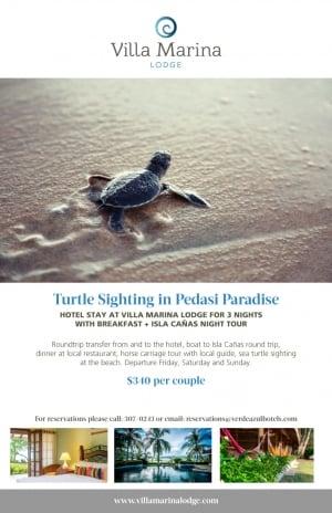 Turtle Watching Tours - Villa Marina