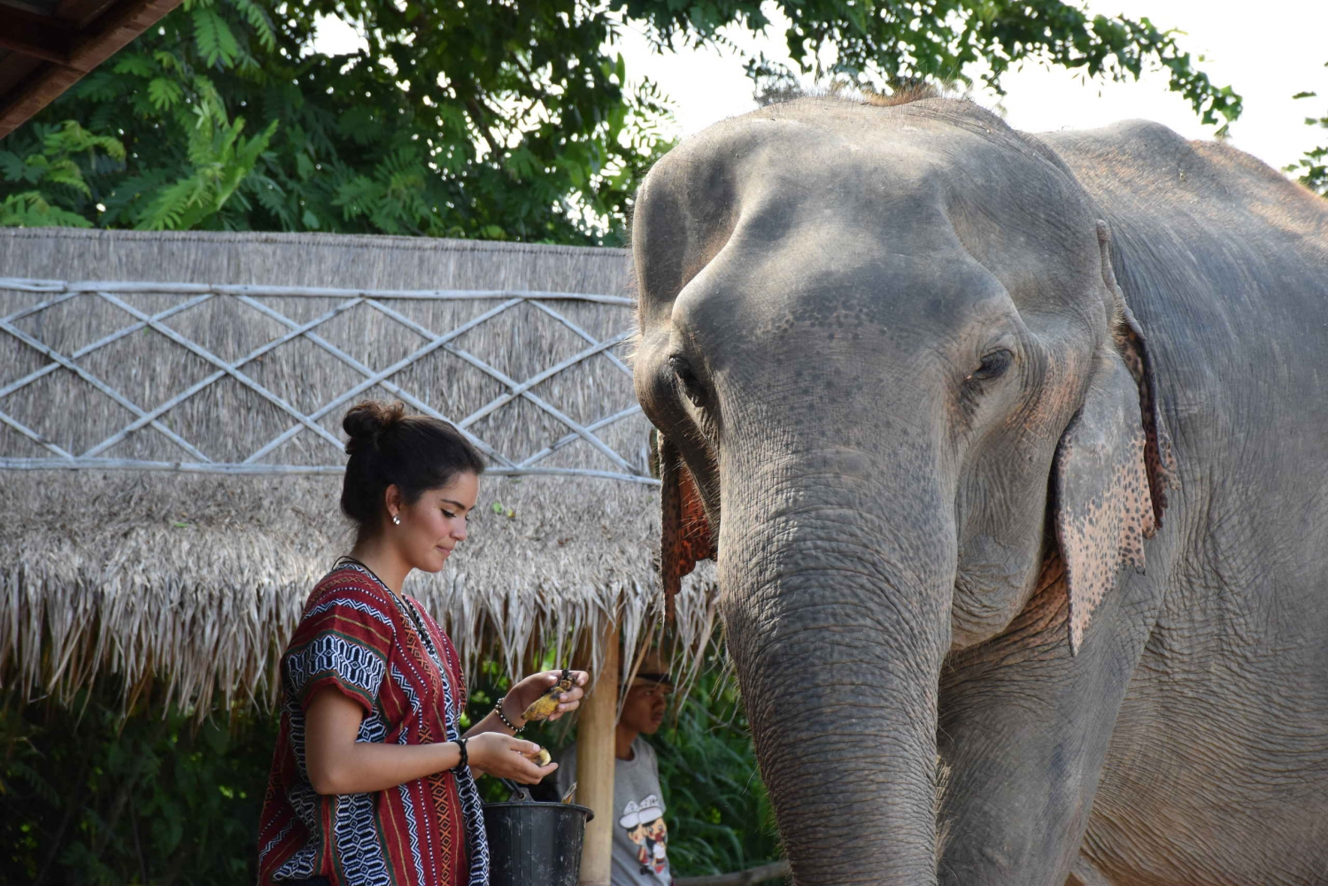 Pattaya's Ethical Choice: Elephant Jungle Sanctuary