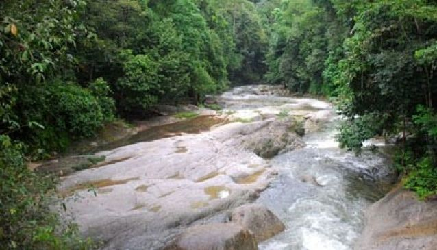 JungleWalla Rainforest & Lost Civilisation Tours