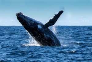 2-Hour Whale Watching Cruise with Aquarium Entry
