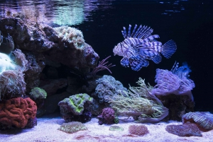 AQWA Aquarium of Western Australia General Entry Tickets