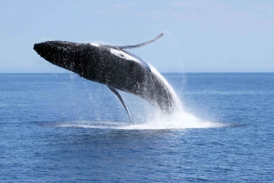 Augusta: Whale Watching Tour