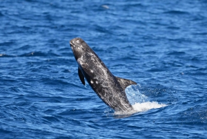 Blue Whale Watching Expedition from Fremantle