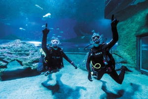 Diving with Sharks and Admission to AQWA