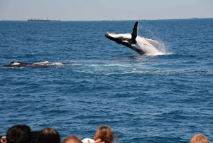 From Fremantle: 2-Hour Luxury Whale-Watching Cruise