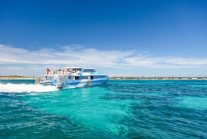 From Fremantle: Rottnest Island Ferry & Admission