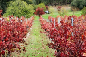 From Perth: Artisan Wine and Cider Tour with Tastings