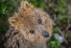 From Perth: Full-Day Rottnest Island Tour by Seaplane