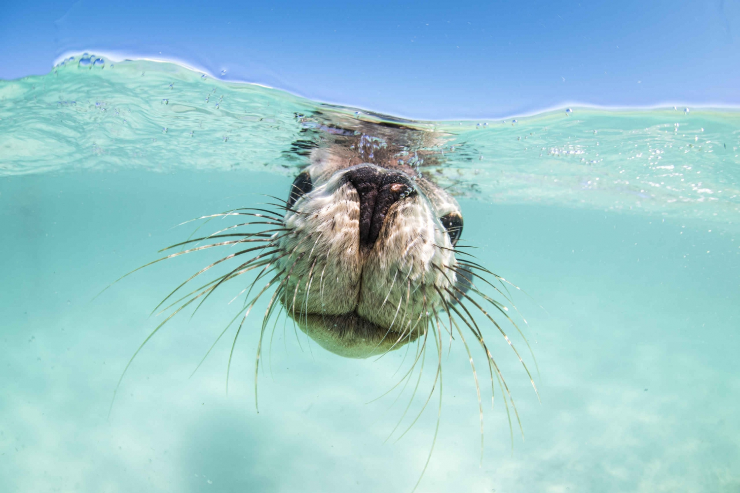 Jurien Bay Sea Lions Boat Trip with Optional Snorkeling
