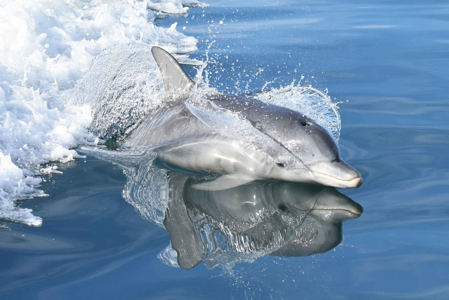 Mandurah Coast: Full-Day Dolphin Adventure Cruise with Lunch